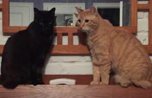 blackie&slick